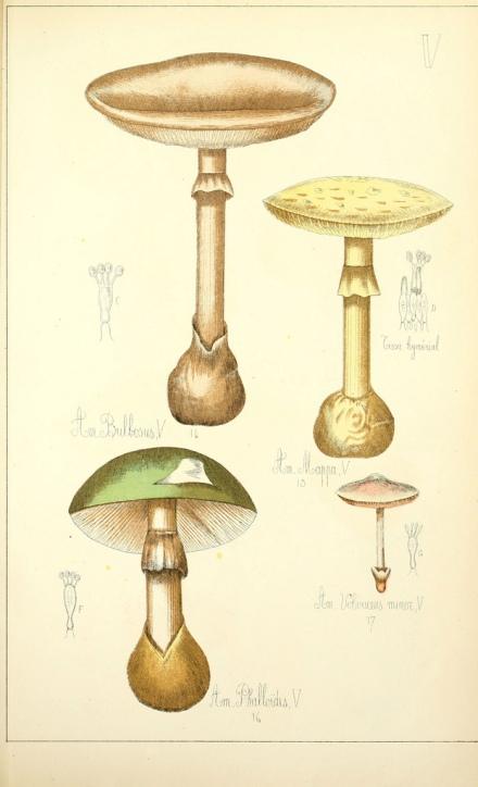 Histoire naturelle des champignons comestibles et vénéneux, Paris, Delagrave, 1883
